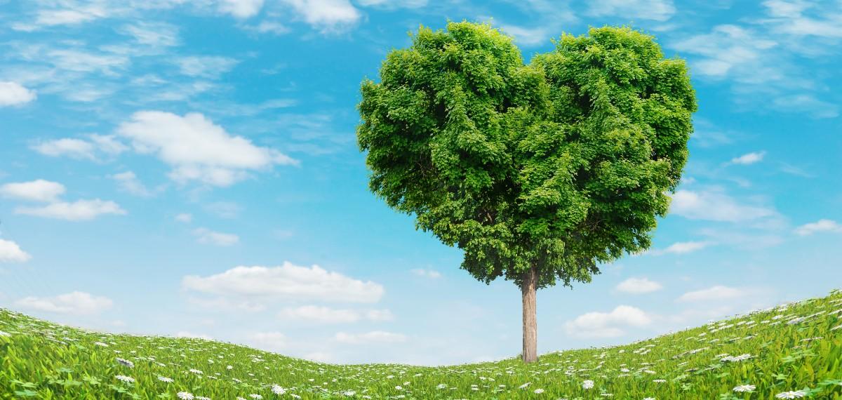 חגיגת אהבה במרחב הכפרי – המלצות חמות לקראת ט